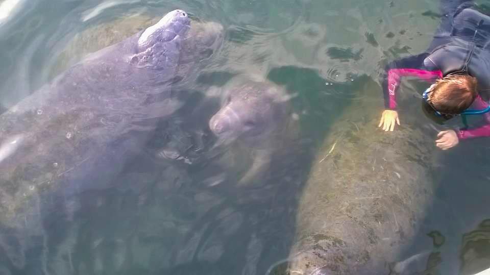 swim-with-manatee-family