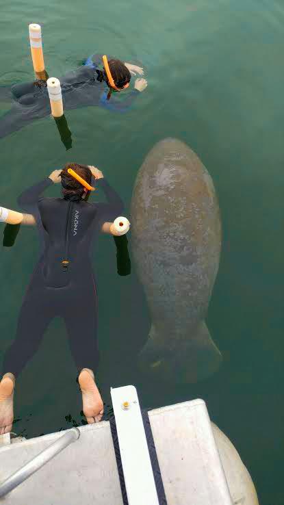 swim-with-manatees-1