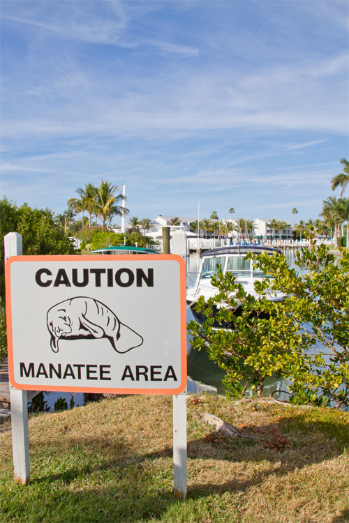 Guidelines To Swim With Manatees