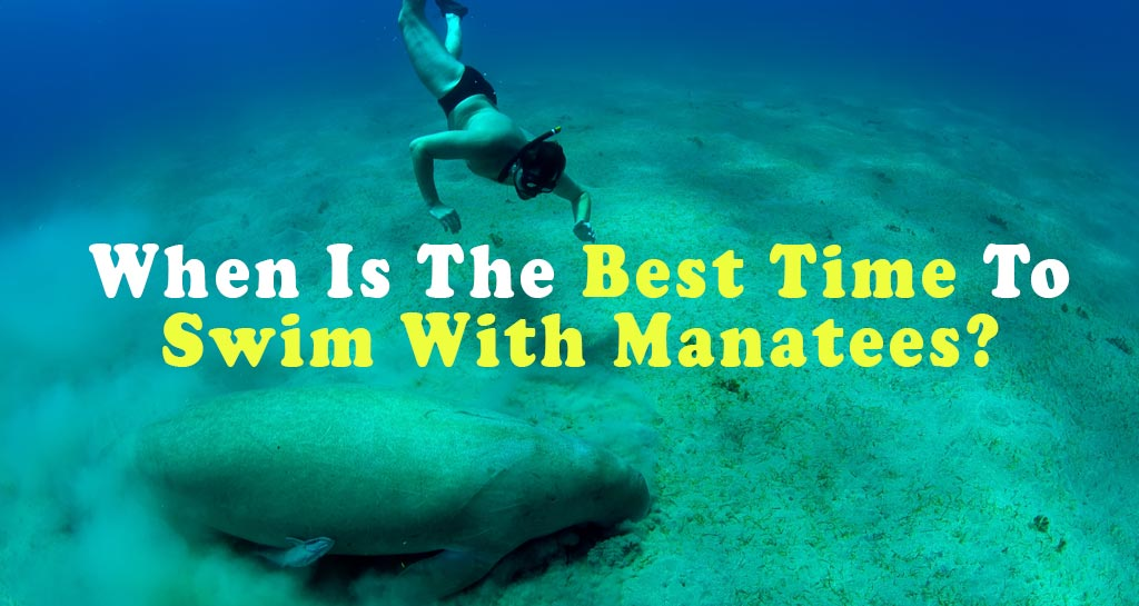 What is the Best time to swim with Manatees?